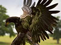 Out of Africa Bird of Prey Experience with a Hot Drink and Slice of Cake