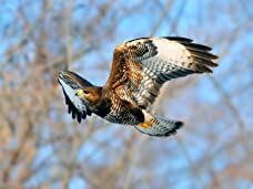 Spectacular Falconry And Bird Handling Experience