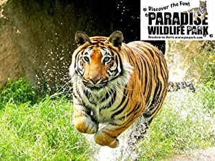 Admission to Paradise Wildlife Park