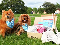 One-Month Subscription to PawPost