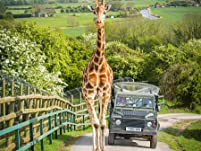 Luxury Safari Break at Port Lympne Reserve's Livingstone Lodge with Two Safaris, Four-Course Feast and Park Entrance