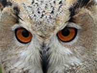 Three-Hour Owl, Hawk and Falconry Experience