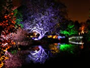 Enchanted Woodland Walk at Syon Park for Two or More People