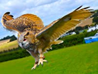 Two-Hour Owl, Hawk and Falconry Experience for One or Two People
