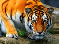 Wildlife Tour and General Admission to Paradise Wildlife Park for One Person