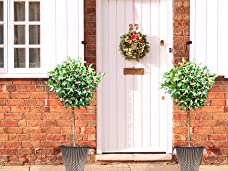 Festive Pair of Holly Bushes with Berries and Plant Pots